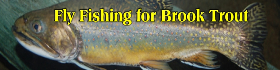 Wild Brook Trout